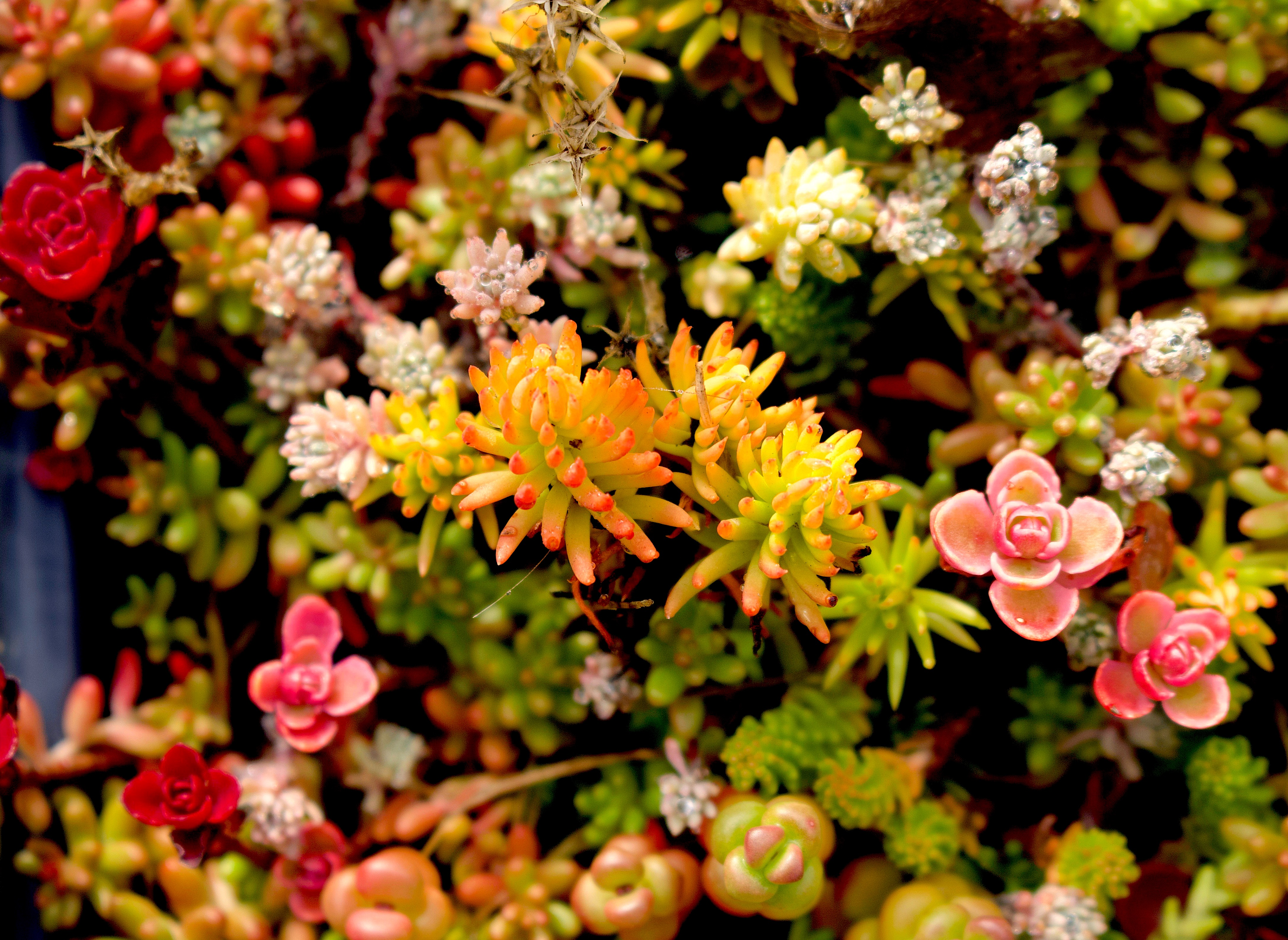 succulents9818