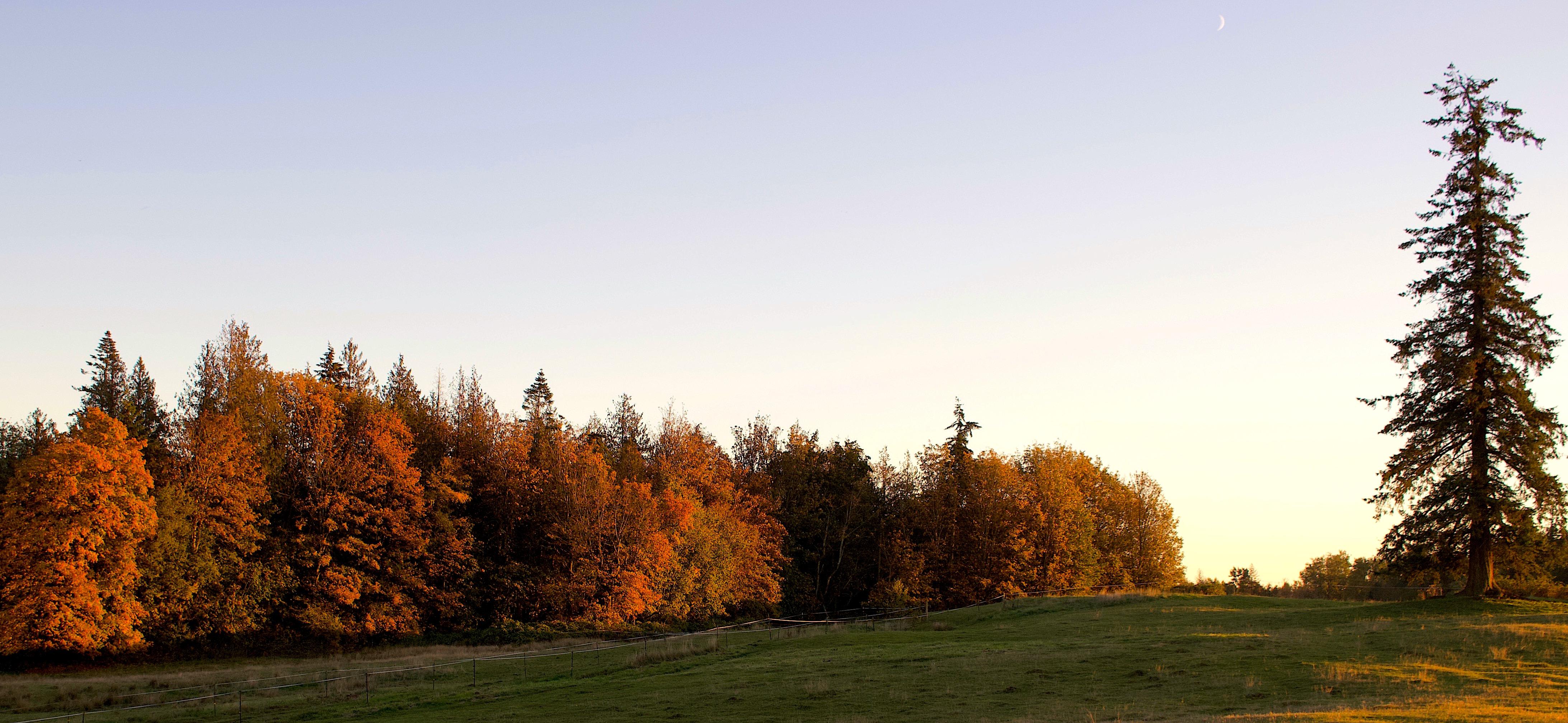 eveningoctfield2
