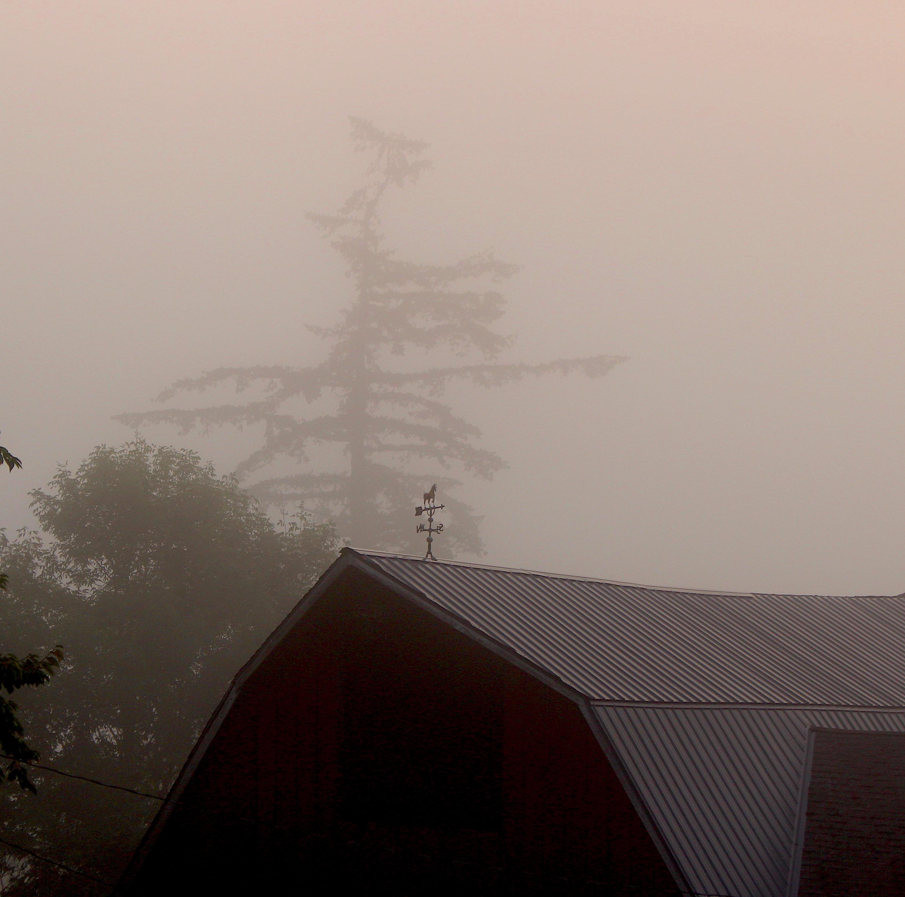 foggy827181