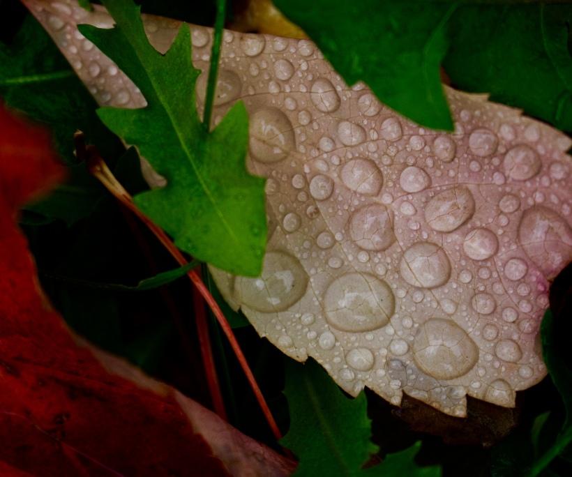 rainyleaf1