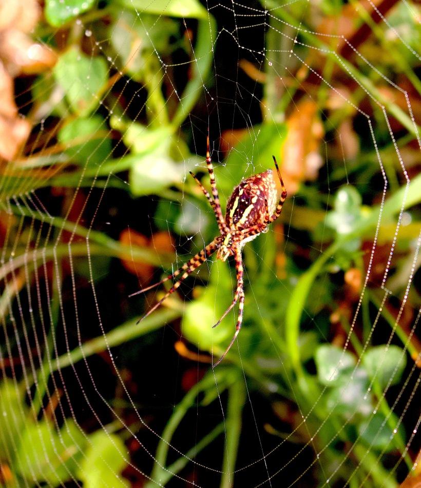spider98181