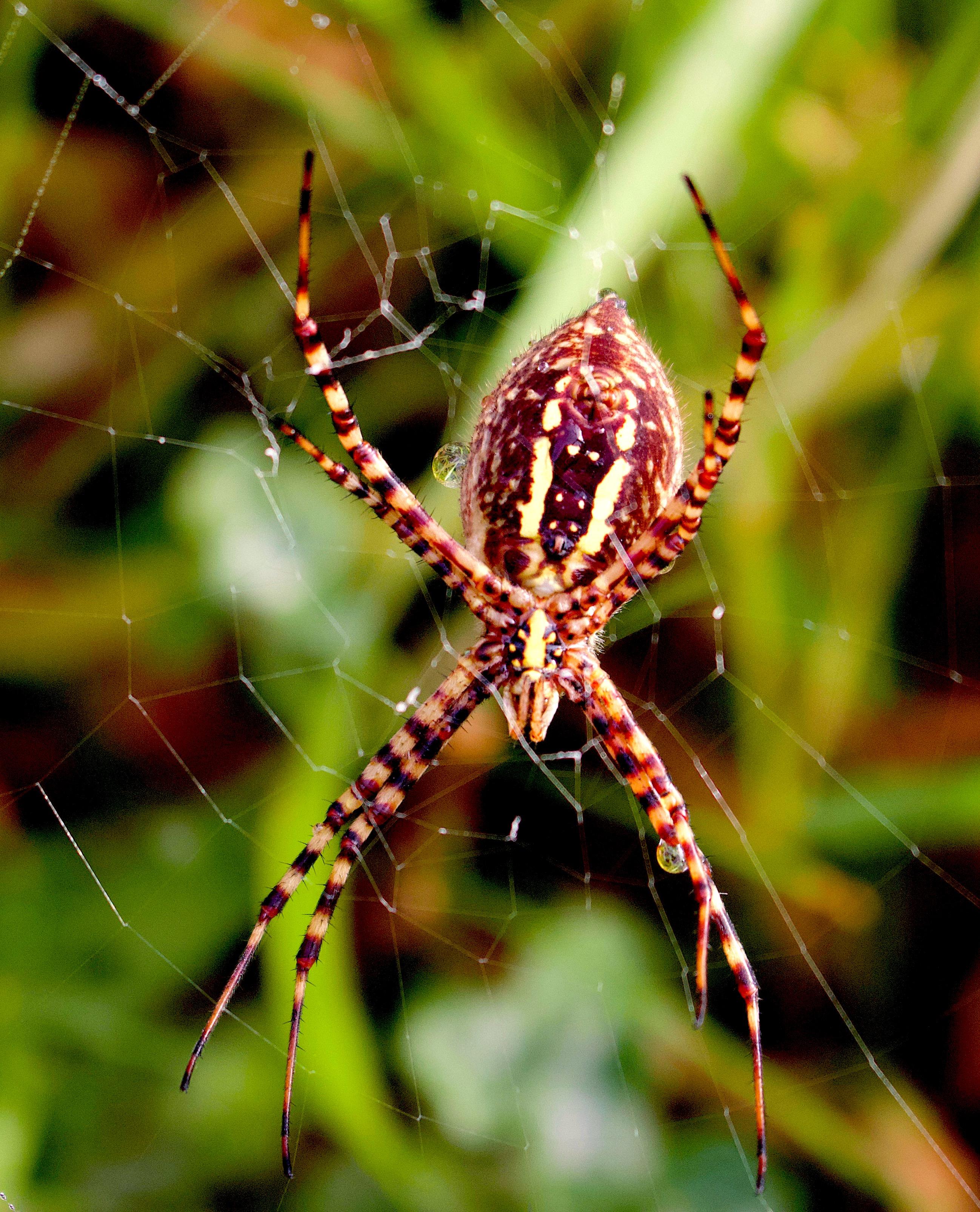 spiderrain3