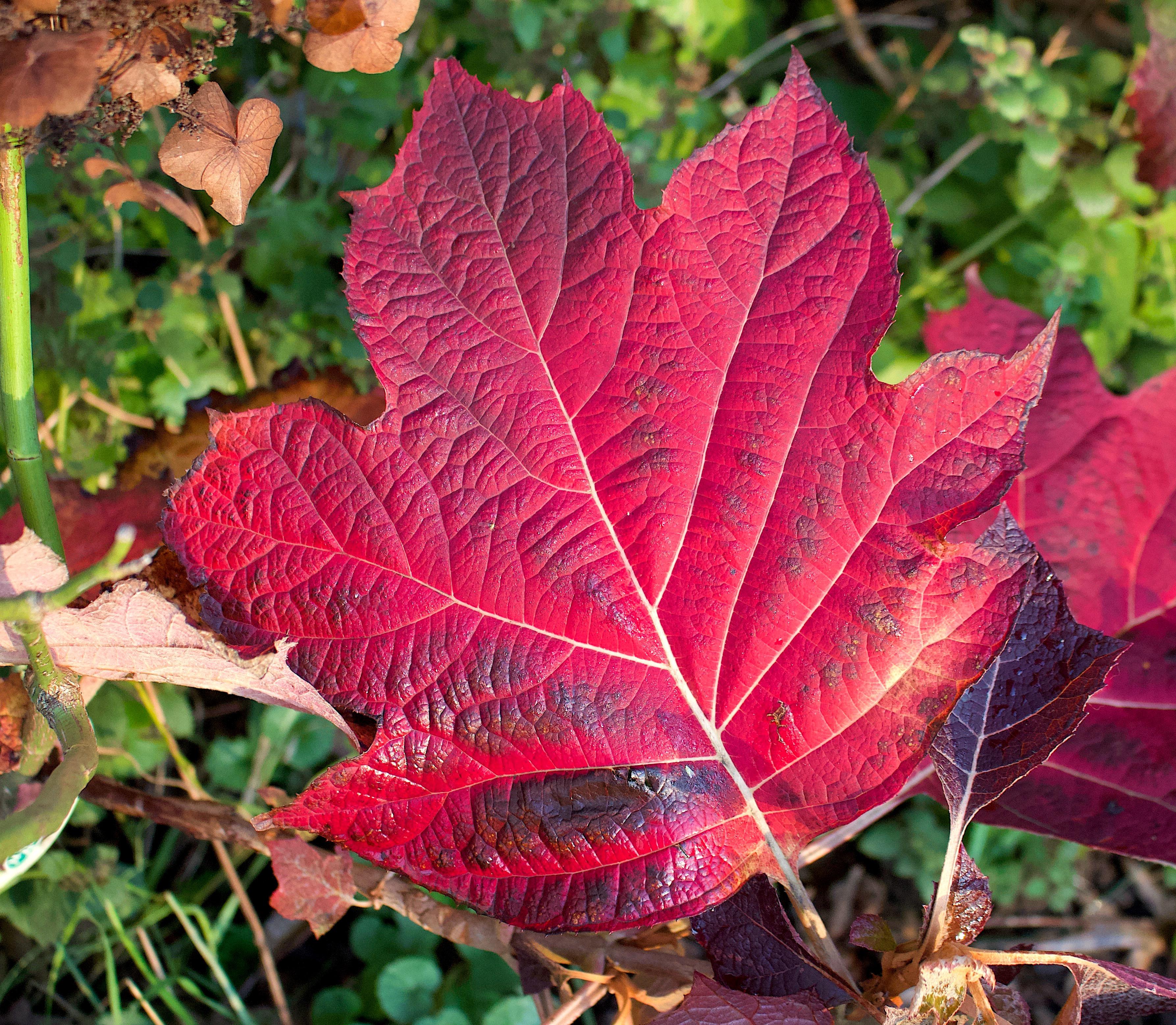 leaf117182