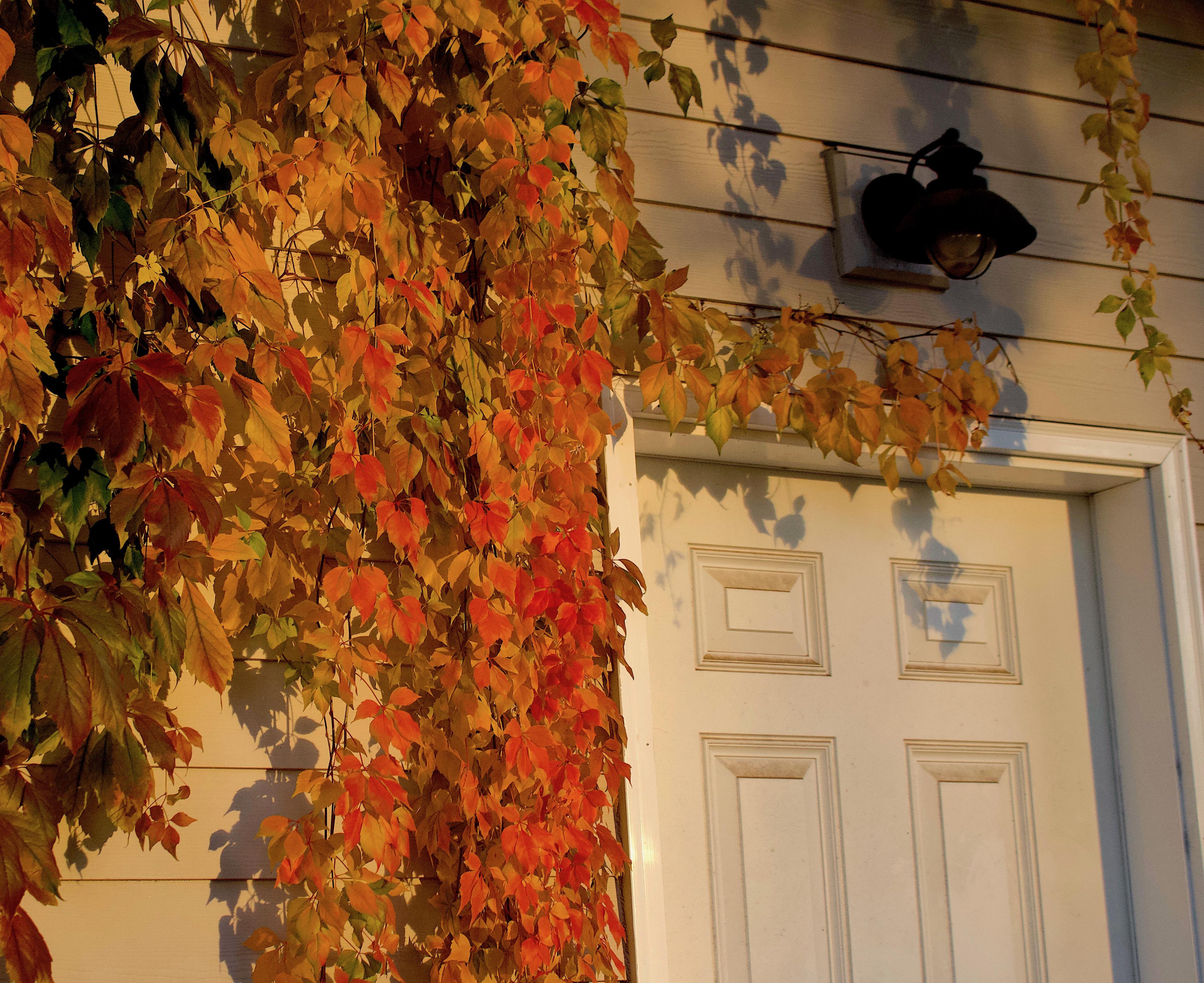 leafdoor