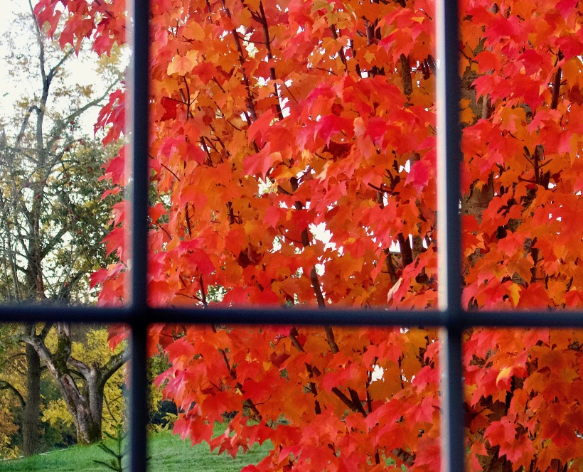 maplewindow