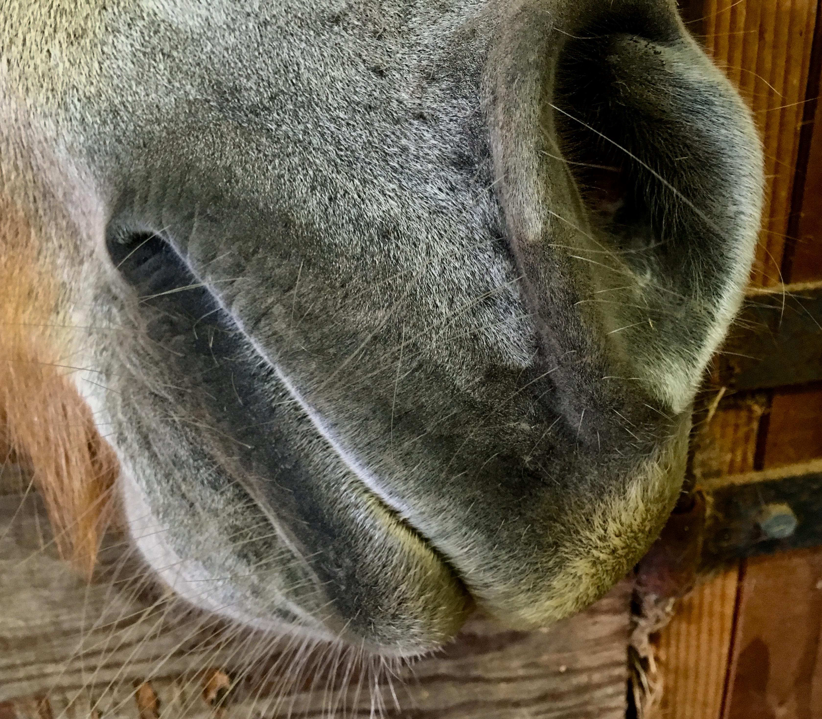 muzzle2