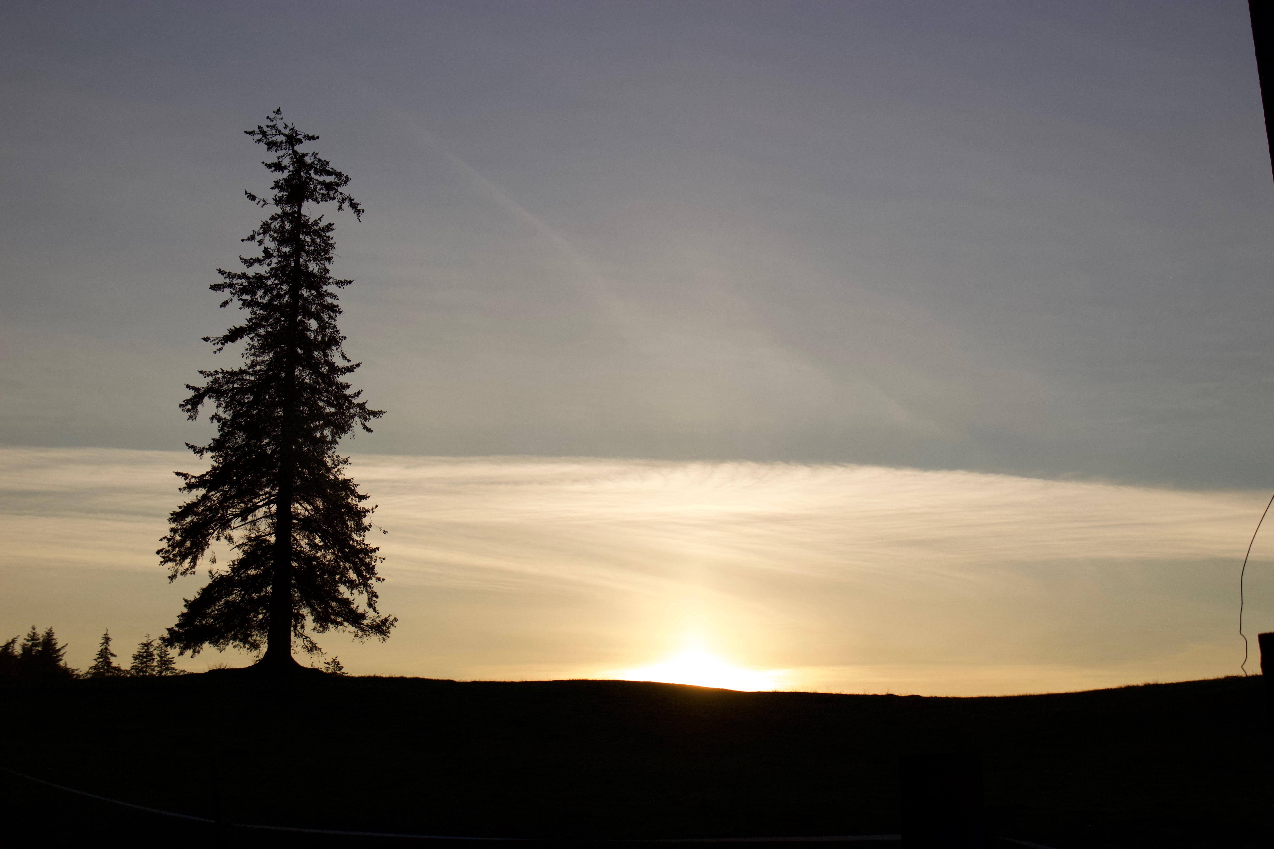 sunset1116181