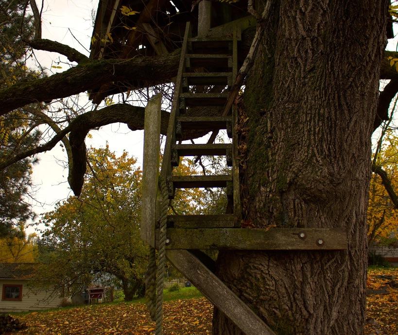 treehousesteps